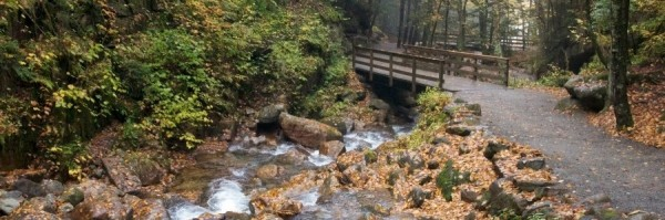 water-rocks-stream-leaves